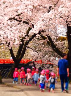 06鶴ヶ城二の丸桜s.jpg