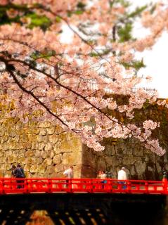 07鶴ヶ城二の丸廊下橋桜s.jpg
