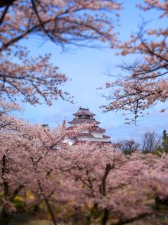 12鶴ヶ城荒城の月丘よりs.jpg