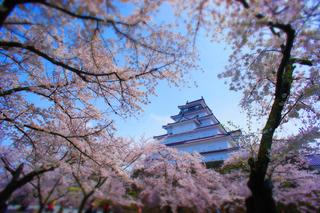 23鶴ヶ城帯廊側より桜s.jpg