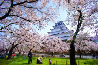 24鶴ヶ城帯廊側より桜.JPG