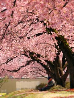 29県立博物館桜の下で.JPG