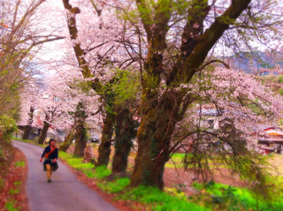 30小田山入口桜s.jpg