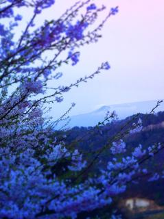 47小田山物見台界隈より磐梯山s.jpg