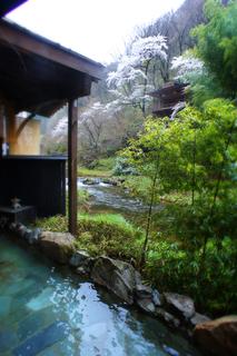 ね瀧の湯幻の湯桜s.jpg