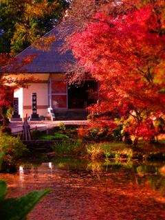 会津大仏願成寺庭園と大仏堂s☆DSC06061.jpg